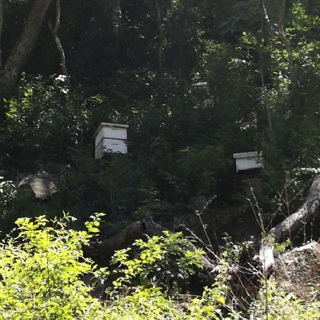 Apiario con cajas llenas de abejas